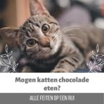 kat chocolade