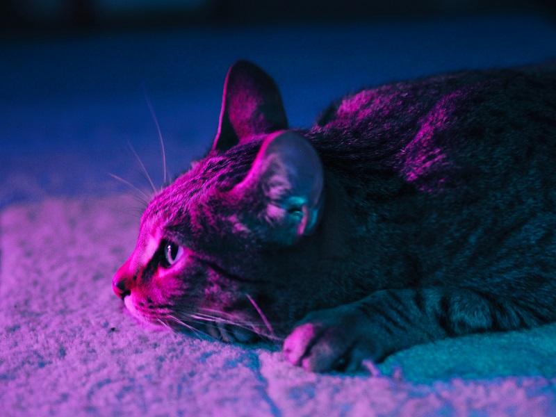 kat vergiftigd symptomen