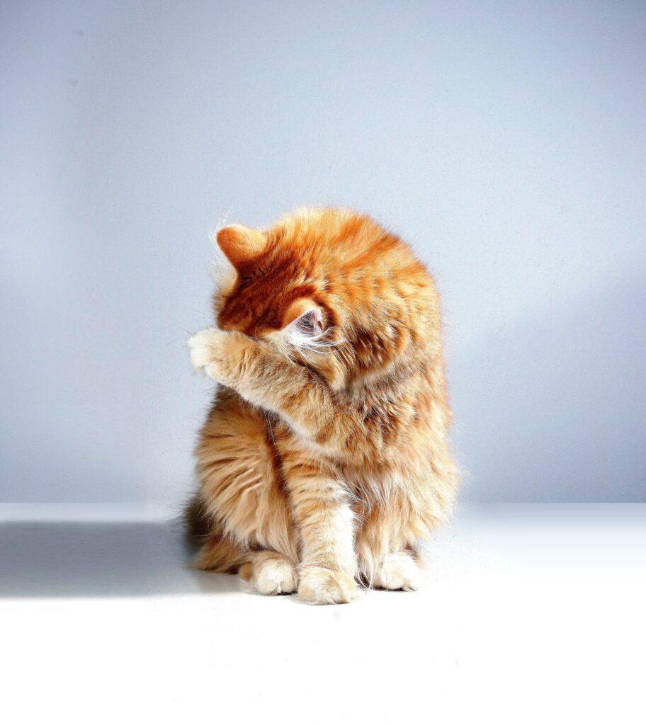 Kat hoest, niest of is verkouden