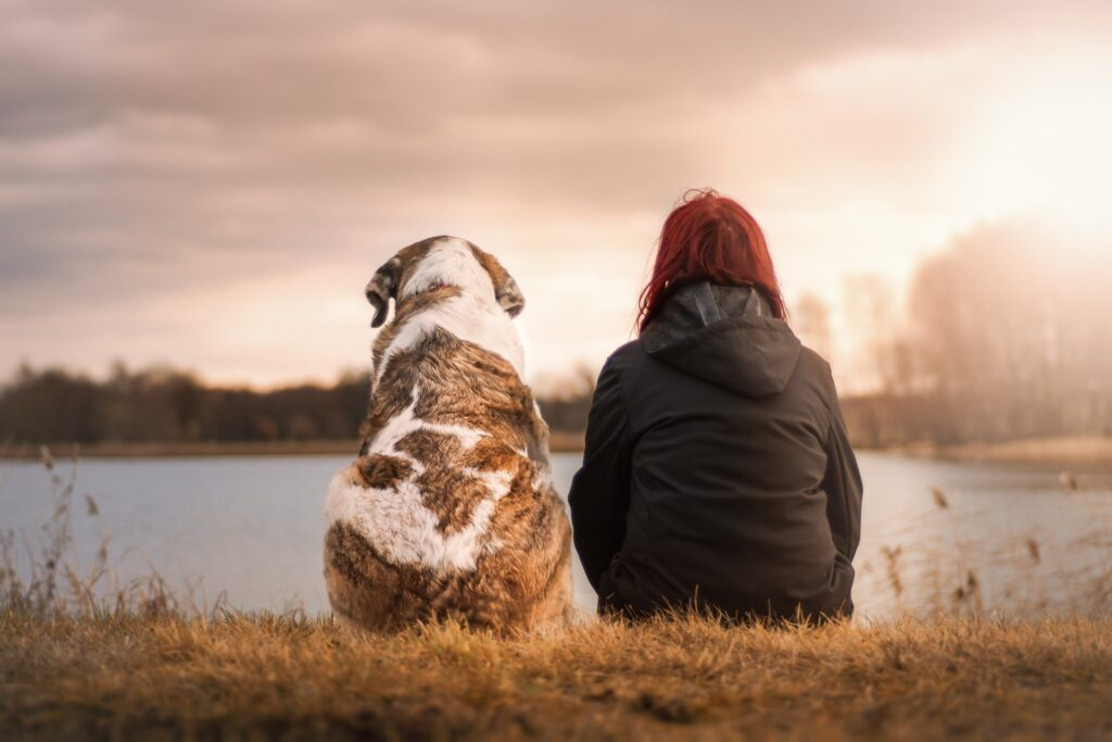 Voordelen denkspellen hond