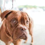 hond-eet-niet-meer