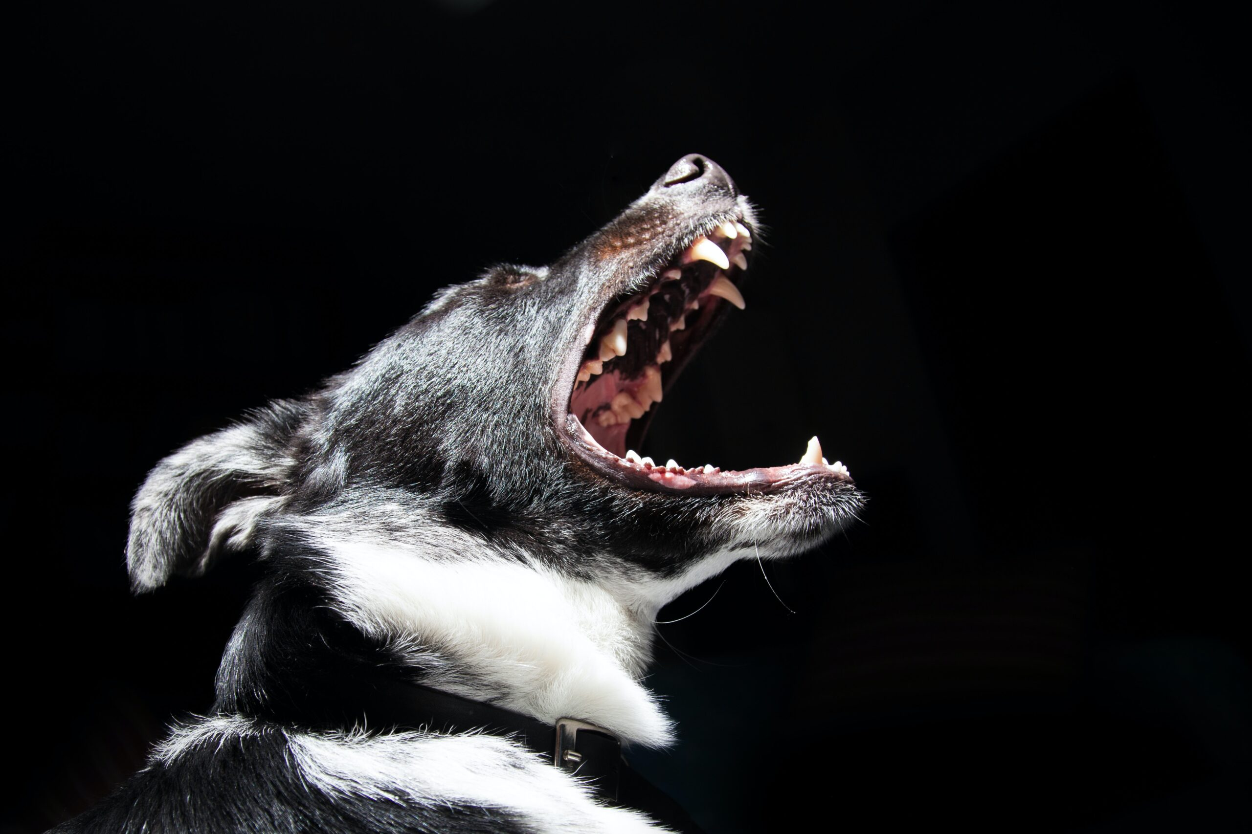 Hond-blaffen-afleren