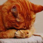 overlijden-kat