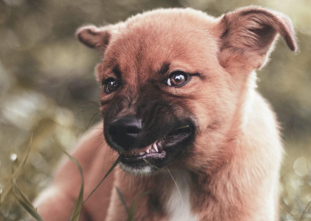 hond zakt door poten
